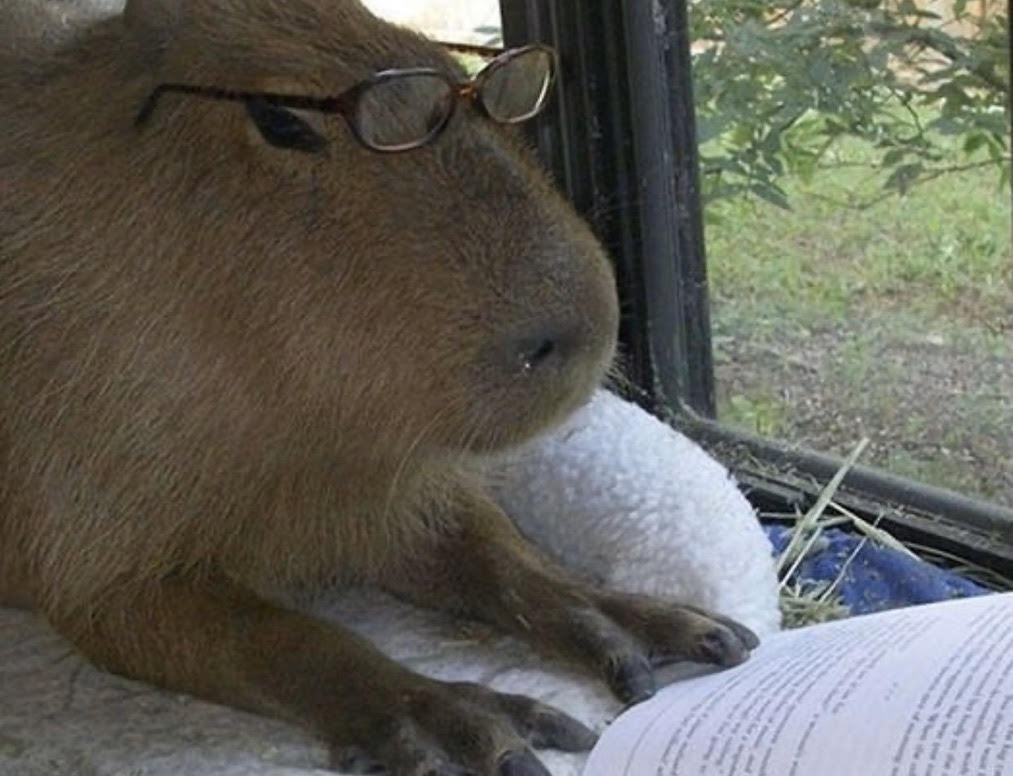 Capybara Chad