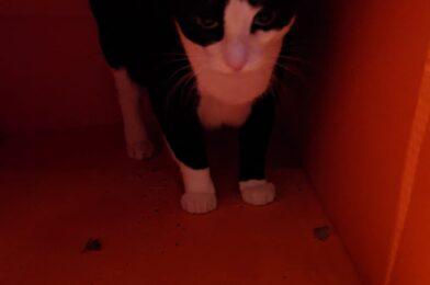 Halloween Special: Schrödinger's Cat