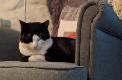 Halloween Special: Schrödinger's Cat Redux